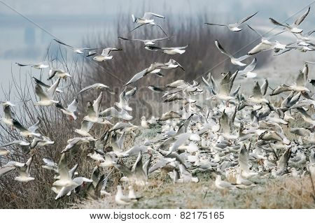 Group Of Gulls On Shore