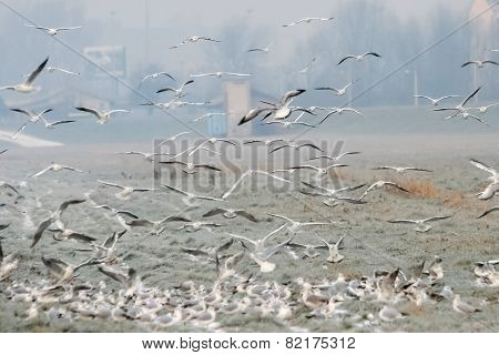 Group Of Seagulls On Field