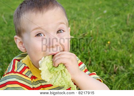 The boy hungrily eats lettuce,