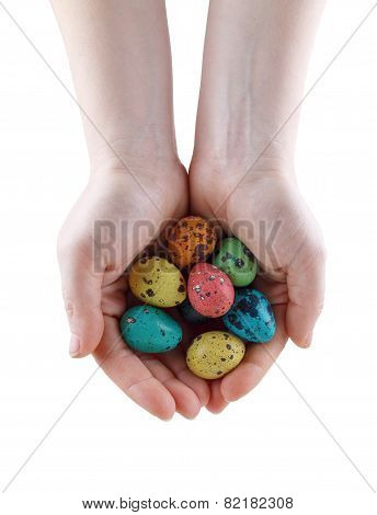 Quail Eggs In Hands