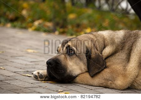 sad dog is waiting for the host