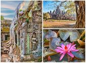 picture of lilly  - Bayon temple Ta Prohm roots and water lilly - JPG