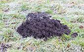 foto of mole  - Molehill - JPG