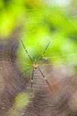 foto of cobweb  - In the mountains of Thailand near a waterfall life this beautiful The golden silk orb - JPG