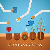 pic of  plants  - Vector timeline infographic concept of planting process in flat design - JPG