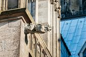 image of gargoyles  - Gargoyl at top of the Cologne Cathedral  - JPG