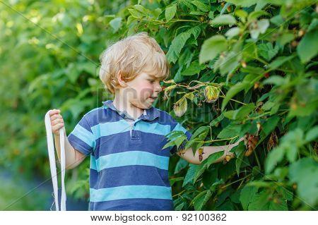 Cute Toddler Boy Having Fun With Picking Berries On Raspberry Farm