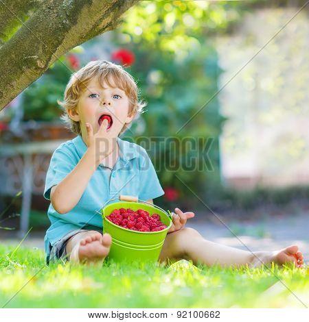 Adorable Little Preschool Boy Eating Raspberries In Home's Garden