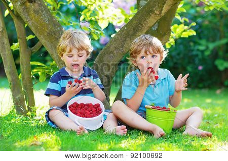 Two Little Sibling Boys Eating Raspberries In Home's Garden.
