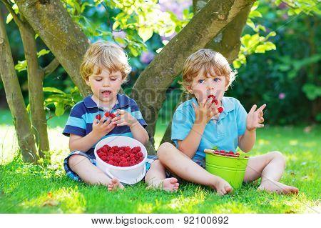 Two Little Sibling Boys Eating Raspberries In Home's Garden.