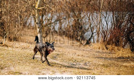 Black Mixed Breed Dog Running In Park In Spring Autumn Season