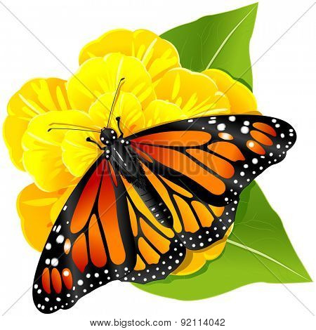 Illustration of Monarch butterflies on the yellow flower