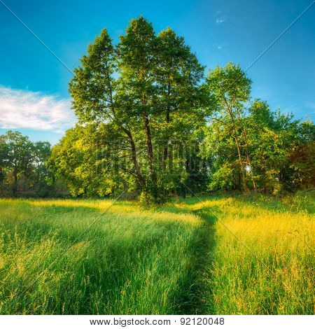 Summer Sunny Forest Trees And Green Grass. Nature Wood Sunlight