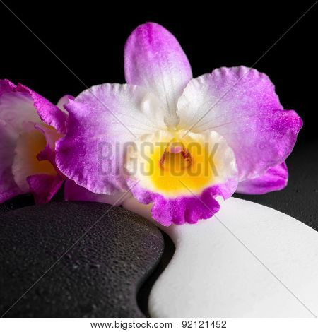 Yin-yang Symbol Of Stone Texture With Orchid Flower On Dew Black Background, Closeup