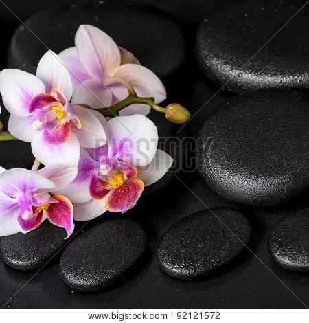 Beautiful Spa Still Life Of Purple Orchid Phalaenopsis On Black Zen Stones With Drops, Closeup