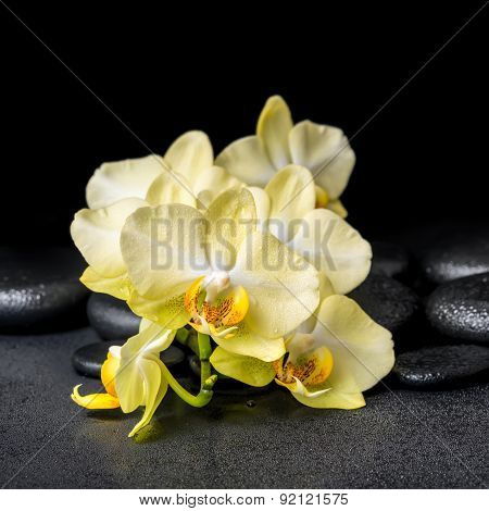 Beautiful Spa Concept Of Yellow Orchid Phalaenopsis On Black Zen Stones With Drops, Closeup
