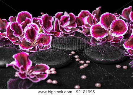 Beautiful Spa Concept Of Blooming Dark Purple Geranium Flower And Beads On Reflection Dark Water, Cl