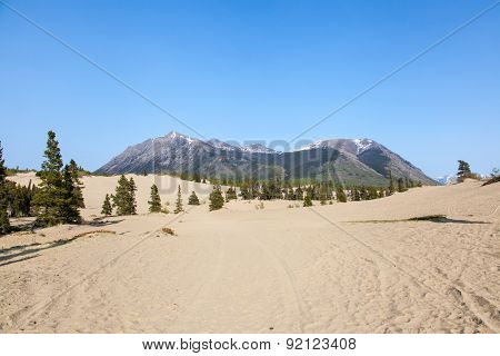 Carcross Desert