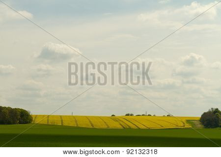 A Scenic View Of Yellow Mustard Fields In The Southwest Of England