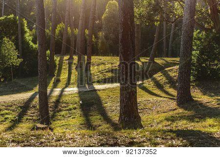 Beautiful and peaceful nature scene