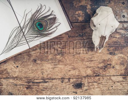 Notebook With Peacock Feather And Sheep Skull
