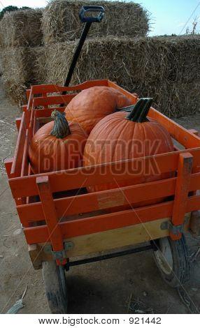 Pumpkins -1