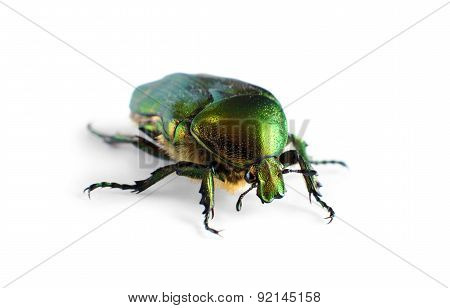 Beetle Isolated On White Background.