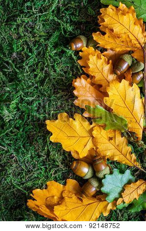 Acorns with autumn leaves on moss background