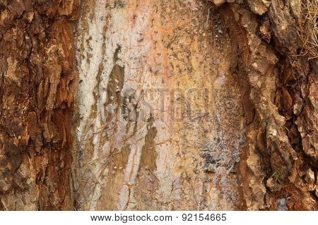 Pine Bark Resin Texture Background