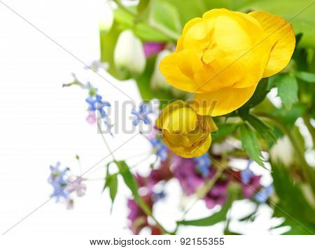 Yellow Trollius Flowers In Posy Close Up