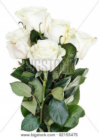 Side View Of Bunch Of White Roses Isolated