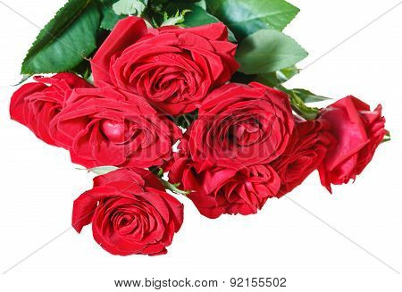 Bunch Of Red Roses Isolated On White