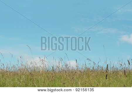 Sunny Meadow With Blue Sky