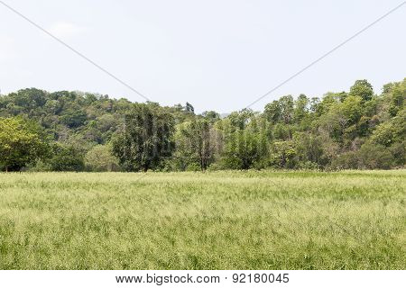 Grass Field Landscape And Wild Flowers