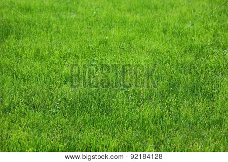 a carpet of grass