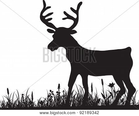 silhouette of grass and deer