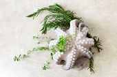 stock photo of neutral  - fresh octopus with aromatic herbs over neutral backgorund - JPG