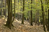 stock photo of decomposition  - The primeval forest with foliage on the ground - JPG