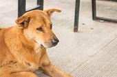 stock photo of homeless  - Homeless thai brown dog sit on the floor - JPG
