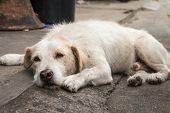 pic of homeless  - Homeless white dog sleep on the side street - JPG