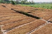 picture of tobacco barn  - leaf Tobacco farmers and producers in Thailand - JPG