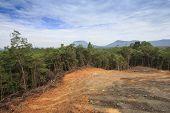 picture of deforestation  - Deforestation environmental damage - JPG