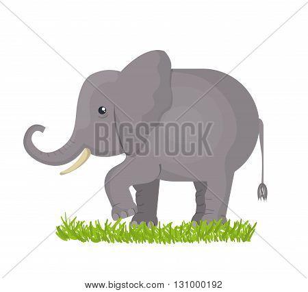 elephant isolated design, vector illustration eps10 graphic