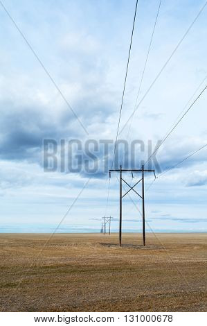 Razor straight set of power lines stretch across a stubble field.