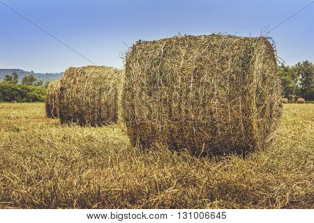 Straw Bales On The Field