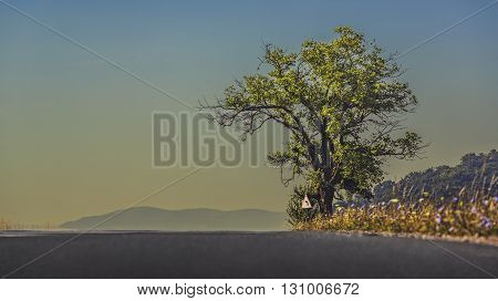 Peaceful landscape with empty road and solitary oak tree on a serene early morning.
