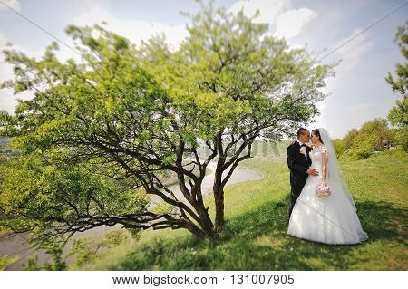 Fashionable Wedding Stay Near Alone Tree Background Landscape Of River And Clouds, Tilt-shift Effect
