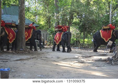 Riding Elephant Service For Look Around The Bayon Temple