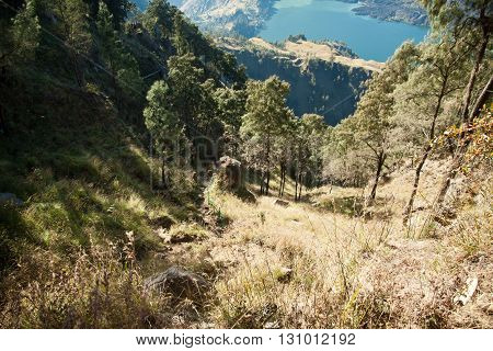 Mount Rinjani trekking in a forest. Nice Landskape on Lombok island.