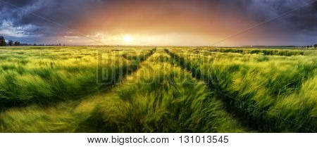 Storm and light on meadow Panorama landscape